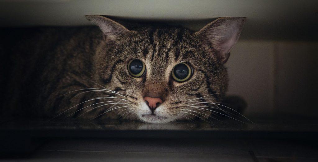 portrait-of-tabby-cat-hiding-under-wardrobe-1163452985-ec61be383ae746e0a591fee6027c73a8