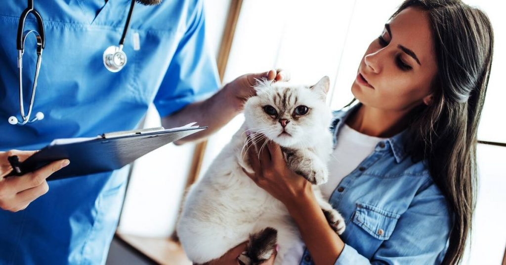 Should-You-Pay-Up-For-That-Expensive-Pet-Surgery-Feature