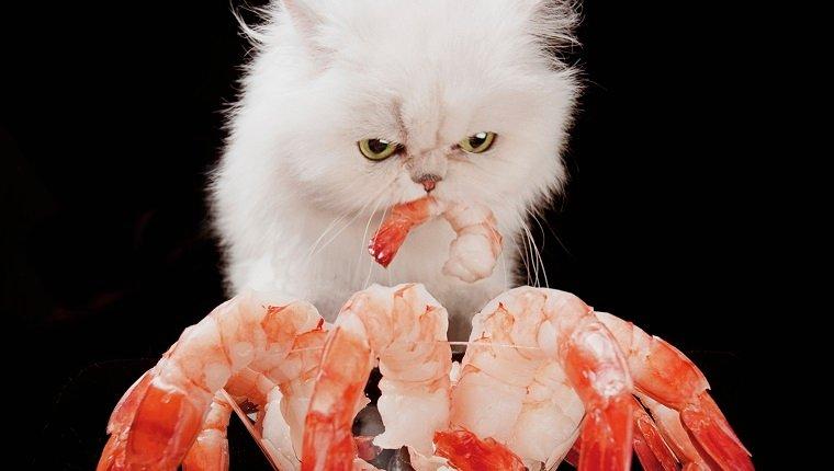 can-cats-eat-shrimp-1